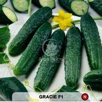 Огірок Грація F1 1000 насінин (Semo)