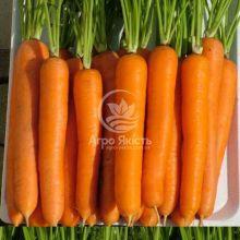 Морква Лагуна F1 1.4 грама (Nunhems)