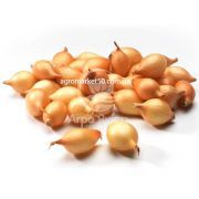 Цибуля сіянка Бургос 1 кг, 8/21 мм (Triumfus Onion Products)