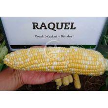 Кукурудза цукрова суперсолодка Ракель F1 / Rakel F1 50000 насінин (Clause)