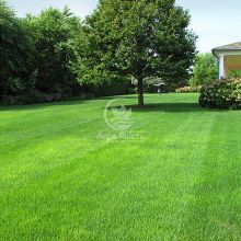 Газонна трава Світлолюбива 1 кг (Feldsaaten Freudenberger)