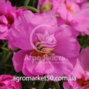 Портулак махровий Хеппі Ауер рожевий 200 насінин