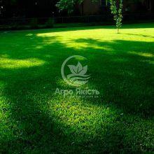 Газонна трава Тіньова 1 кг (Evro Grass)