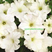 Петунія Браво біла 1000 насінин (Syngenta)