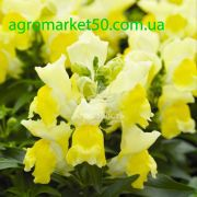 Ротики садові (Антірріум) Монтего жовтий 100 насінин