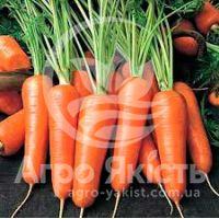 Морква Нью Курода 10 грам (Hortus)