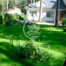 Газонна трава Декоративна Evro Grass 1 кг