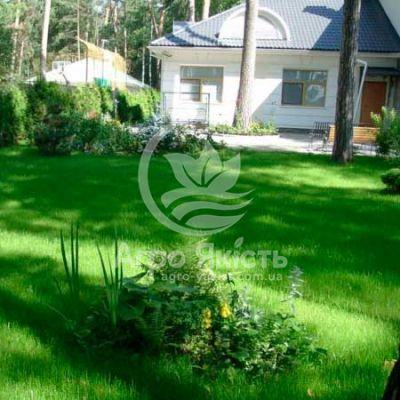 Газонна трава Декоративна 1 кг (Evro Grass)
