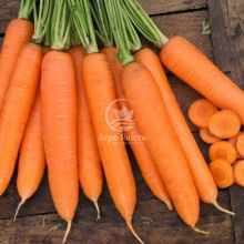Морква Сіркана F1 1,4 грама (Nunhems)