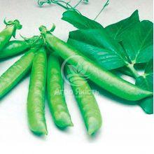 Горох овощной Сомервуд / Somerwood 500 грамм (Syngenta)
