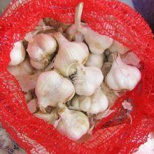 Часник Мессідром 0,5 кг (Triumfus Onion Products)