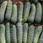 Огірок Мірабелл F1 10 насінин (Seminis)