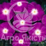 Катарантус СанШторм фіолетовий з вічком 100 насінин (Syngenta)