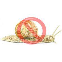 Моллюскоциды (от моллюсков)