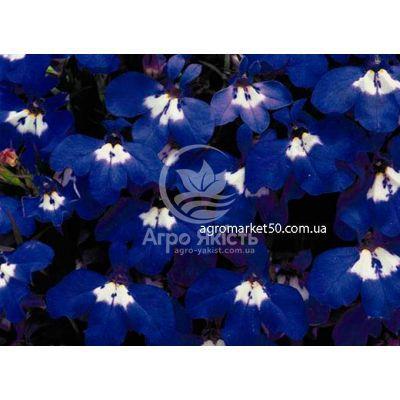 Лобелія Рів'єра синя з вічком 200 насінин (Pan American)