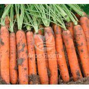 Морква Наполі F1 25000 насінин, фракція 1,8 - 2,00 (Bejo)