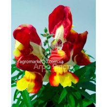 Ротики садові (Антірріум) Снеппі червоно - жовтий 100 насінин