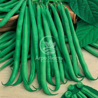 Квасоля спаржева Серенгеті / Serenheti 100000 насінин (Syngenta)